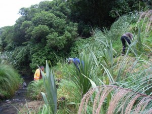 Planting along the Owhiro Stream with FOOS