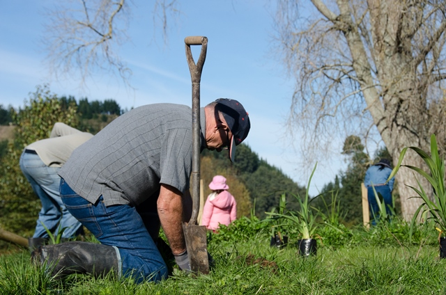 Putaruru Planting 3 - reduced